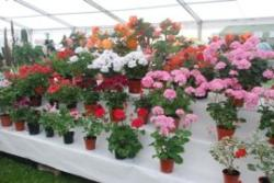 Summer Flower & Vegetable Show